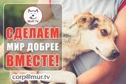 Животным помощь. Поддержка информационная